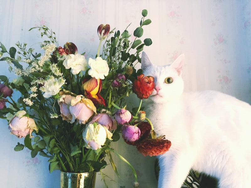 white cat standing next to flowers