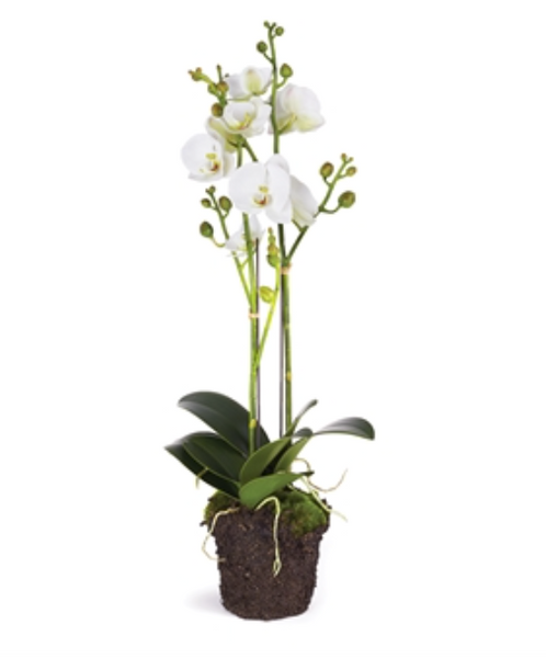 "Orchid Phalaenopsis x2 Drop-In 23""T"