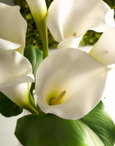 "Stems 28"" Cream Real Touch Calla Lily"