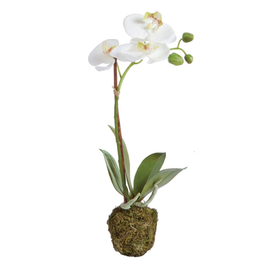 "Orchid Phalaenopsis Drop-In 15""T"
