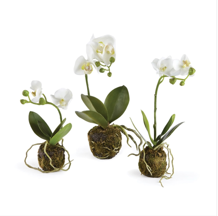 Orchids Set of 3 Phalaenopsis Drop Ins