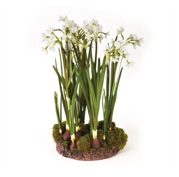 "Paperwhites 18"" Drop-In"
