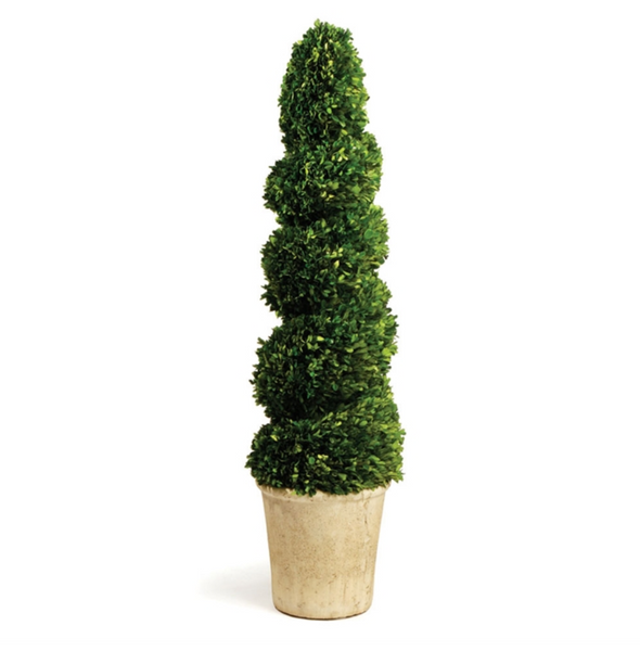 "Boxwood Spiral Topiary 52.5""H"