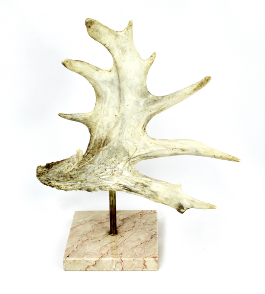 Palmated Antlers On Marble Bases