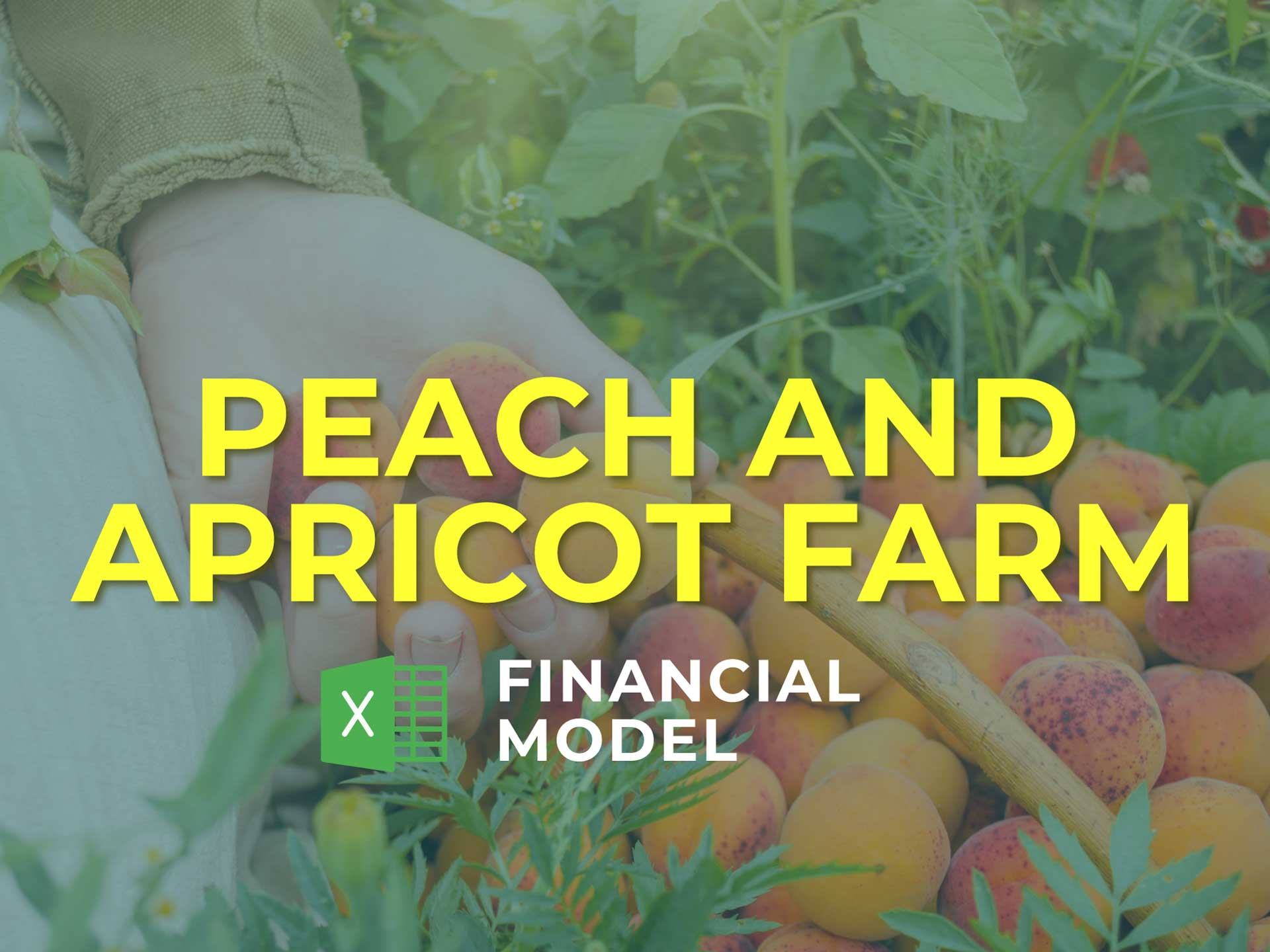 Peach And Apricot Farm