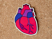 Load image into Gallery viewer, Sticker shaped like a human heart in bisexual pride colours