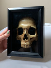 Load image into Gallery viewer, front portion of human skull set in a black shadow box frame.