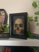 Load image into Gallery viewer, front portion of human skull set in a black shadow box frame. frame is sitting on a shelf