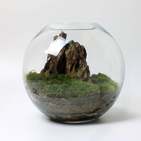 Moss Orb [LOCAL BRISTOL COLLECTION ONLY]