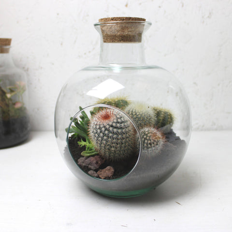 Apple Terrarium
