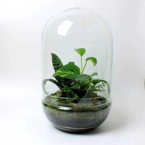 Dome Jungle Terrarium [LOCAL BRISTOL COLLECTION ONLY]