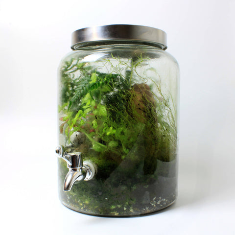 Bioactive Tap Terrarium [LOCAL BRISTOL COLLECTION ONLY]