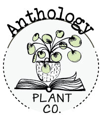 Anthology plant company curated house plants and gifts