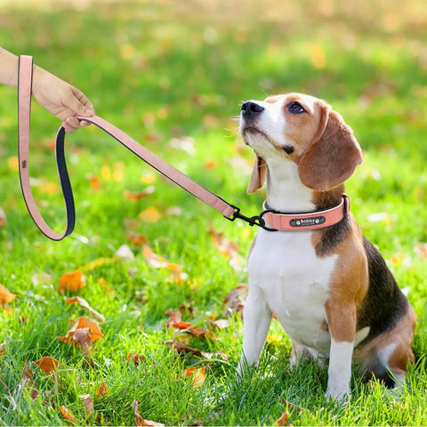 Leather Collar and Leash - Dog's Love Store