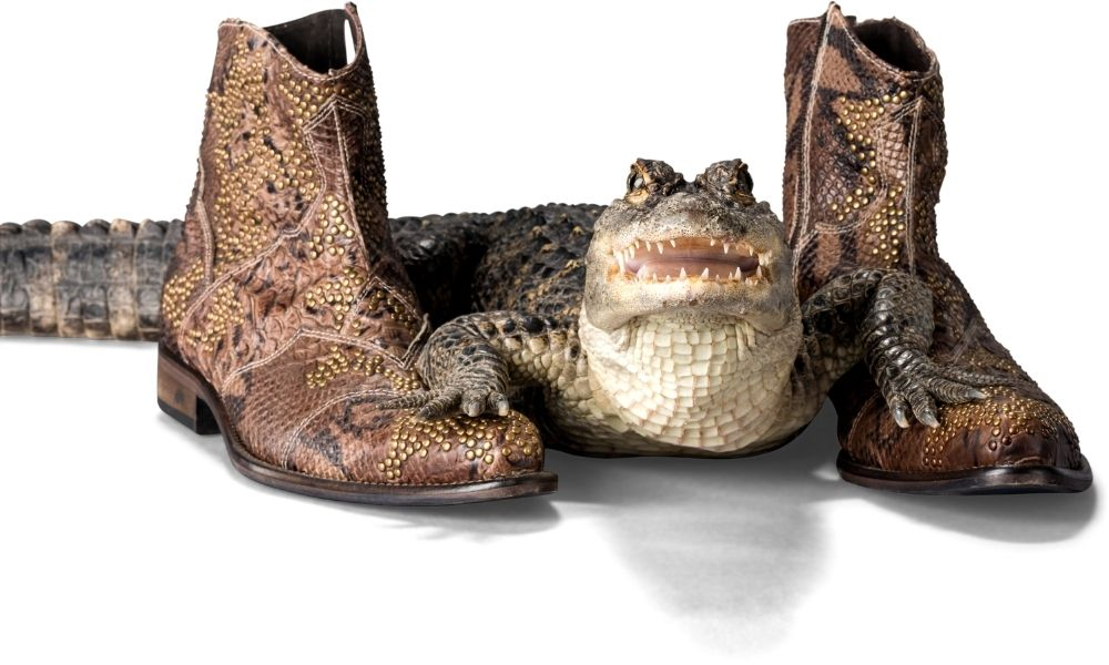 How to Properly Care for Alligator Shoes