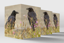 Load image into Gallery viewer, Corvus Corax 23 - Common Ravens
