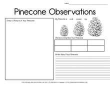 Load image into Gallery viewer, Pinecone Observation Science Experiment: Why Do Pinecones Open and Close?