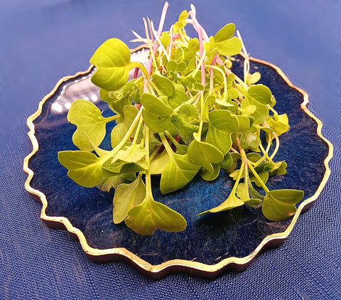 Organic Spring Salad Mix Microgreens - By Leaf Sweets
