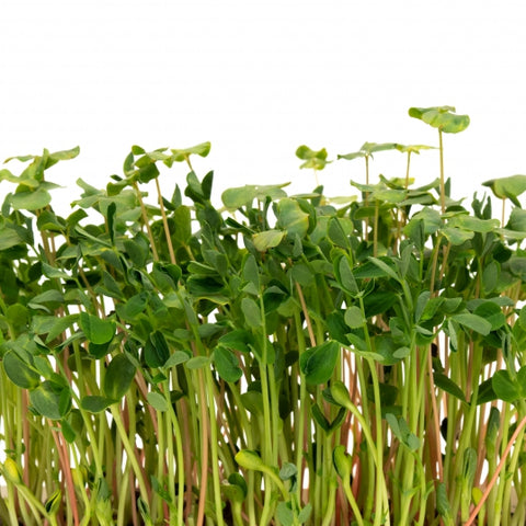 Microgreen Salad Mix - By Leaf Sweets