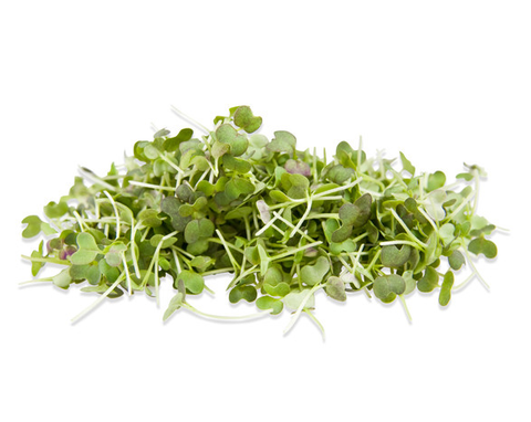 Organic Brown Mustard Microgreens - By Leaf Sweets