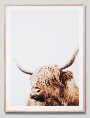 Bovine Portrait Framed Photograph