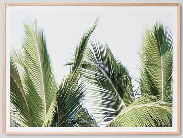 Palm Fronds Framed Photograph