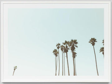 Palm Tops Framed Photograph