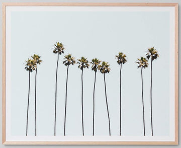 Ten Tall Palms Framed Photograph