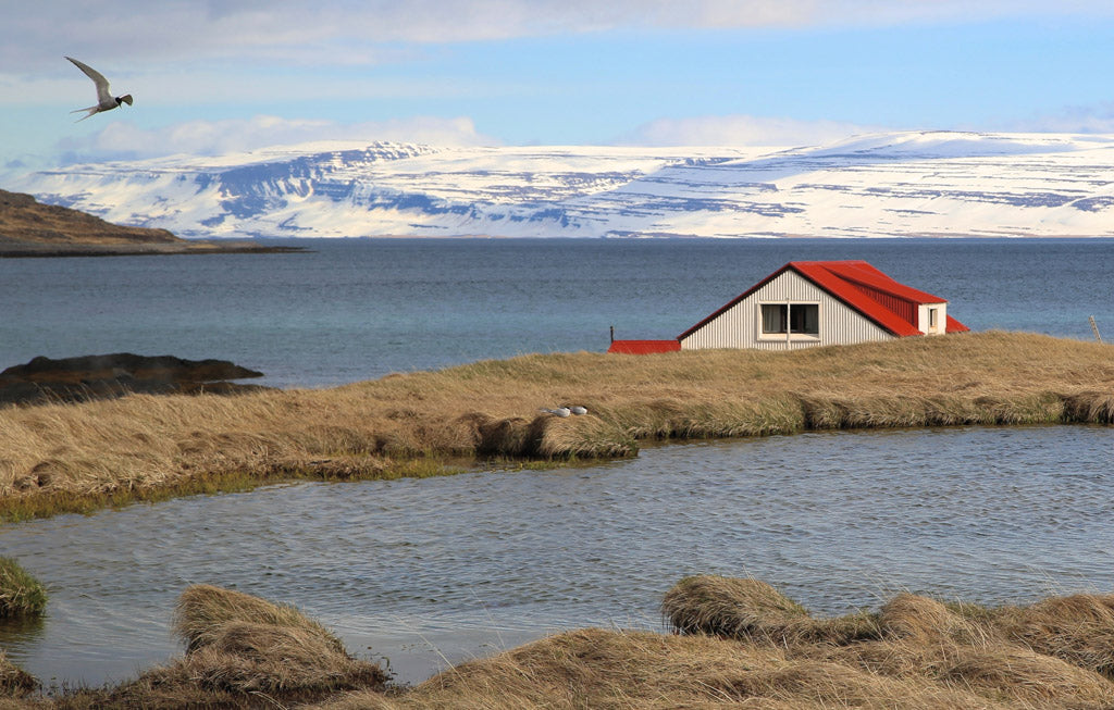 The site of Reluctant Trading Icelandic Flaky Sea Salt Harvesting