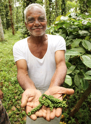 Farmer picking peppercorns in India for Reluctant Trading