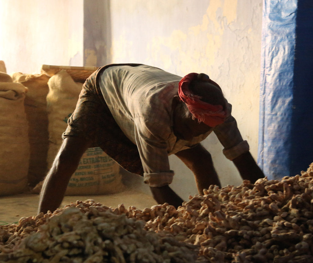 Bagging ginger in Kochi, India