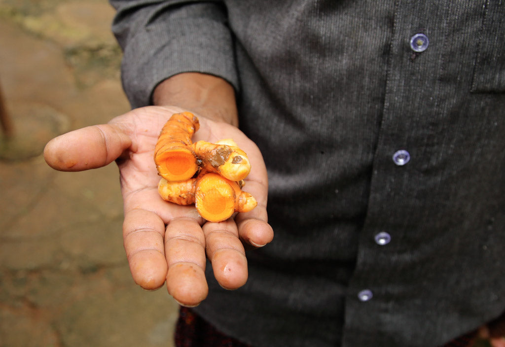 Handful of turmeric in Kerala India