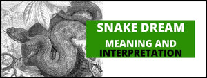 Dreams About Snakes: Meaning and Interpretation