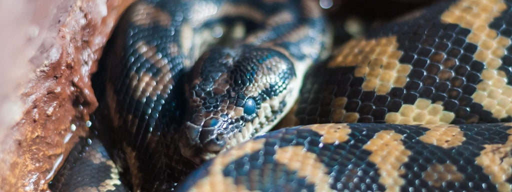 Pet Snake Picture