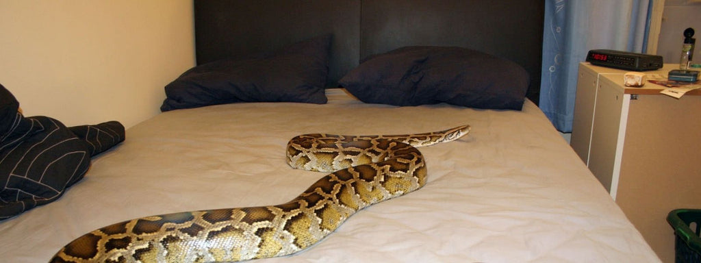 Snake on Bed in Dream Islam