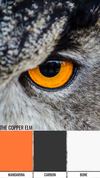 Wise Owl Paint color inspiration using orange in the color Mandarina, Carbon, and Bone