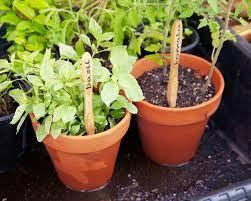 plant pots with bamboo toothbrush