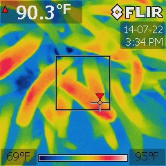 Sample FLIR Image