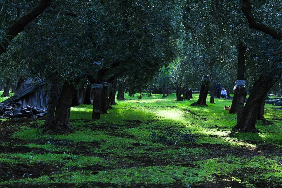 Best Olive Oils Store