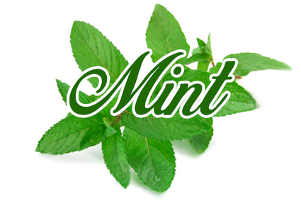 Mint (tobacco base) e-liquid