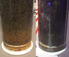30 days, same tank regiment and feeding; Activated Charcoal (left); AquaChar (right)