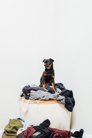 Dog Home Alone On Laundry Being Naughty