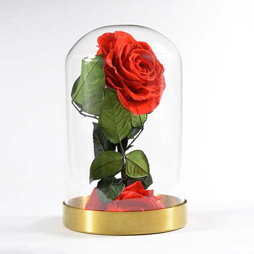 Little prince everlasting preserved rose glass cover