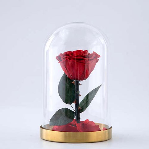 Long lasting fresh forever real touch preserved rose flower in glass cover with stem