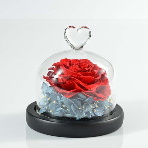 Real rose flower dried preserved flowers in glass cover