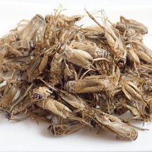 Load image into Gallery viewer, Professional Size Edible Cricket Ent-crisp (figure) BBQ flavor 500g (Europe Cricket)
