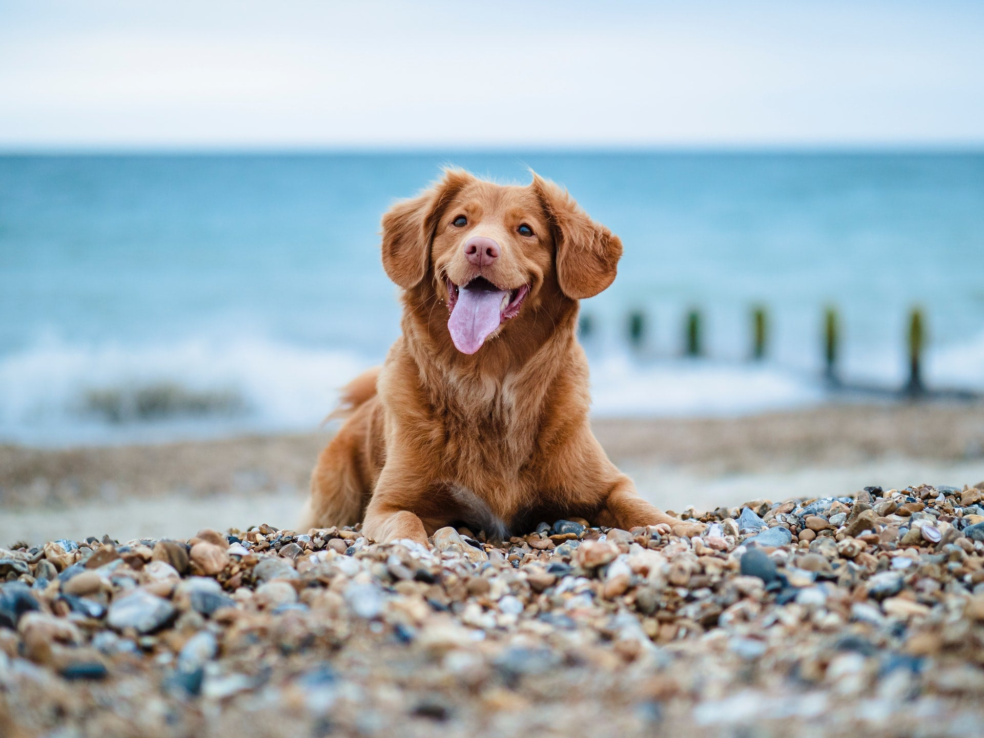 Puppy on a pebbled beach