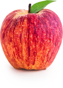 Apple, Gravenstein (dwarf)