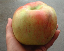Apple, King (dwarf)
