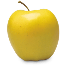 Apple, Yellow Delicious (dwarf)